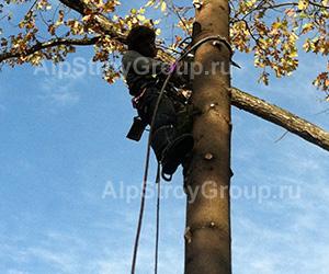 монтаж гирлянды на дерево